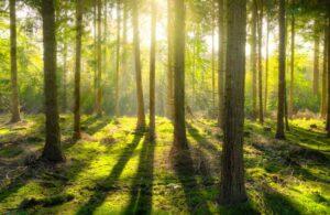Wald im Alstertal